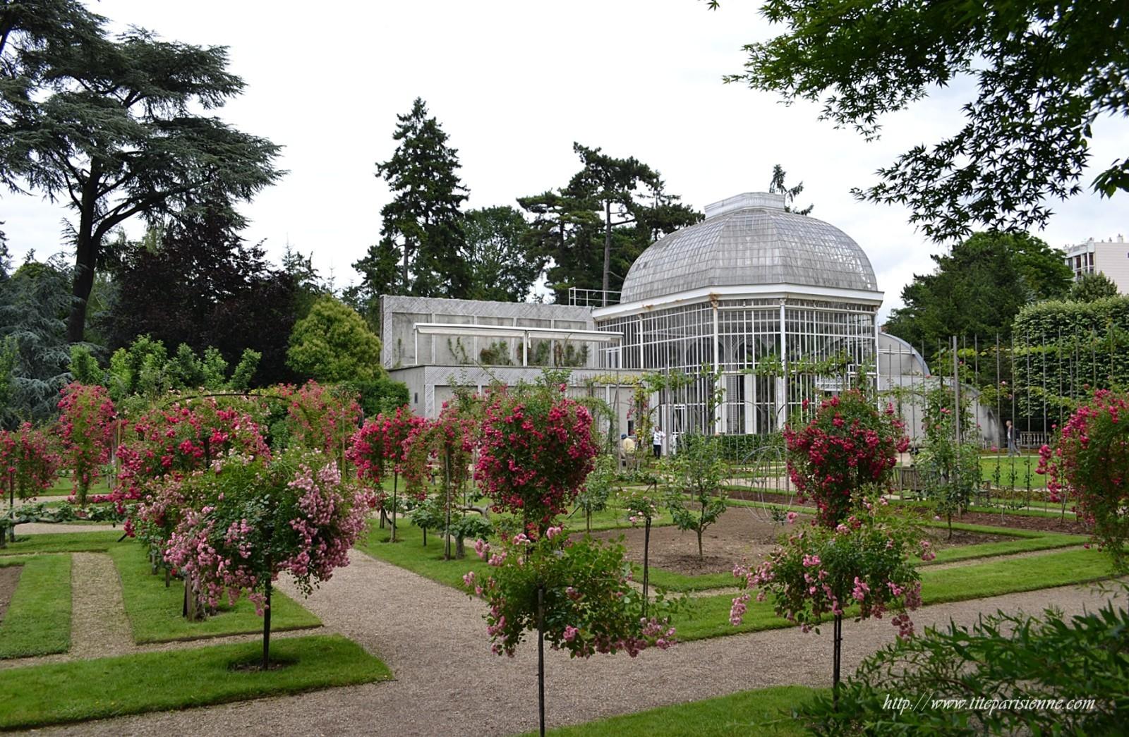 Jardins albert kahn la roseraie une fleur de paris Le jardin francais