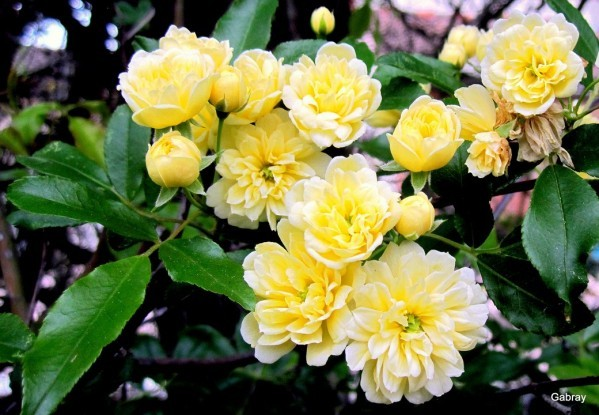 S08 - Roses