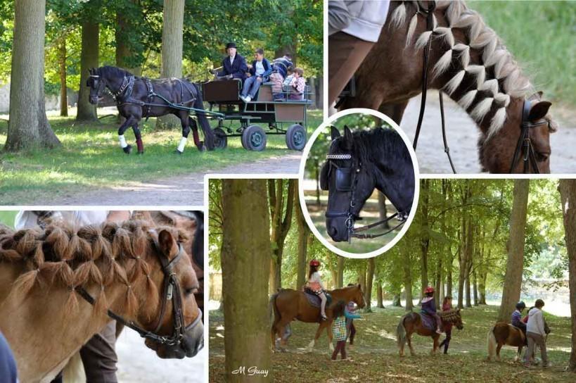 chevaux-2089-3424-2082-2084