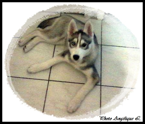 Jeska (3,5 mois)