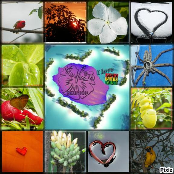 Photos faune, flore, nature , paysage
