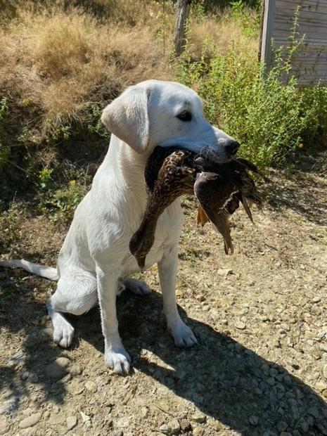 Première chasse