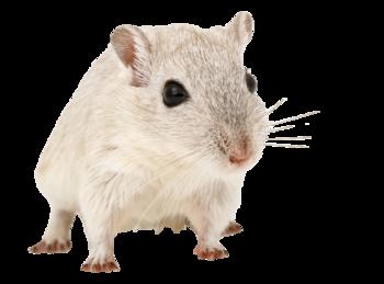 Tubes Souris et Rats