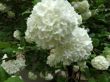 Tout en Blanc (1)