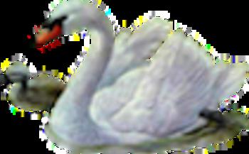 Cygnes 2