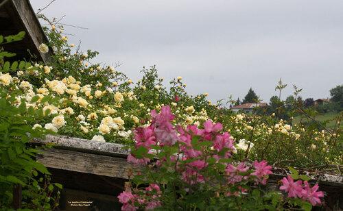 'Gardenia'