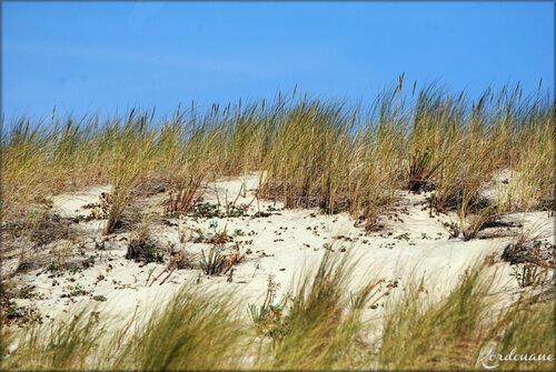 Photo de Pinède de la pointe du Cap Ferret