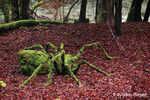 Landart : l'araignée. Création et photo : Sylvain Meyer