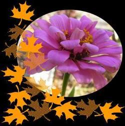 Jardiner avec la lune Novembre du 1er au 15