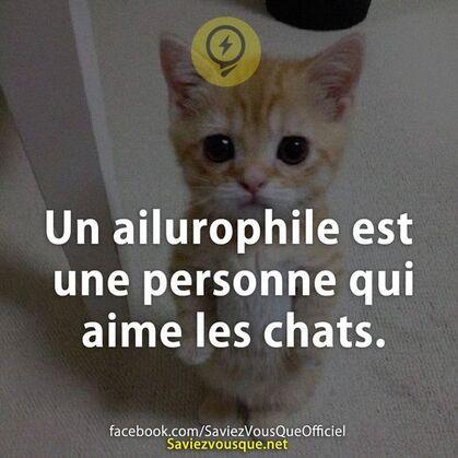 Un ailurophile est une personne qui aime les chats. | Saviez Vous Que? | Tous les jours, découvrez de nouvelles infos pour briller en société !