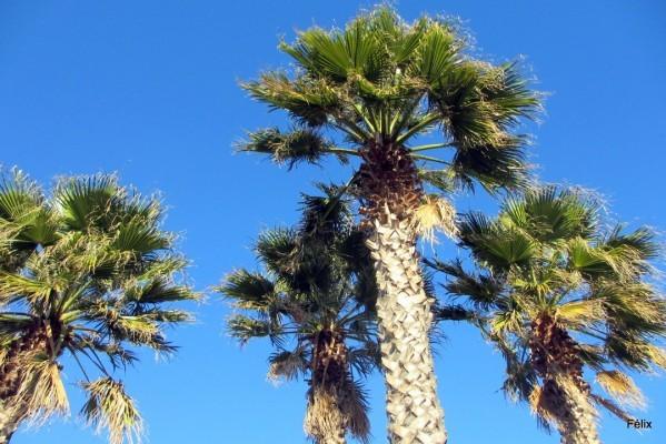 u09---4-palmiers.JPG