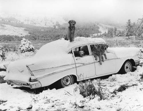 01 - Dogs and Cars, suite