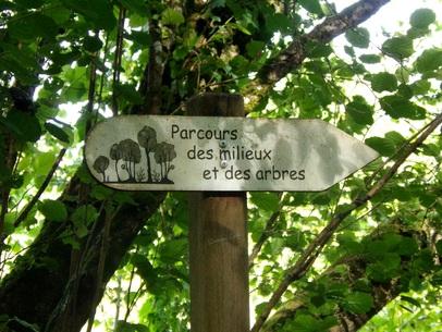 Un paon de jour attiré par la photo ... Chateaudun - Eure et Loire - 28200