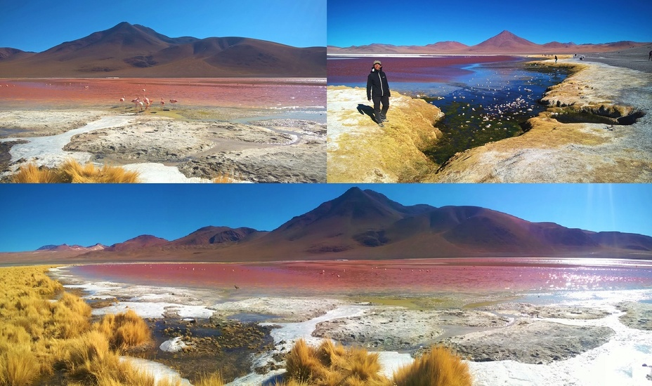 la laguna colorada  et ses flamants roses