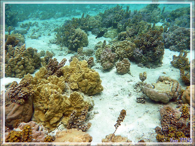 """Mise à l'eau dans le """"Jardin de corail"""" côté océan - Motu Tautau - Taha'a - Polynésie française"""