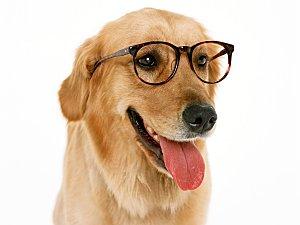 chien-humour-lunette.jpg