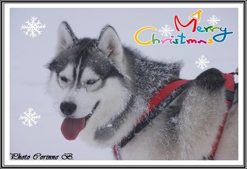 Vos photos de Noël (27 décembre 2014)