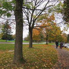 promenade photographique du 26 octobre au 3 novembre