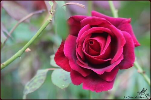 Un après midi de septembre....Au Chant des Roses
