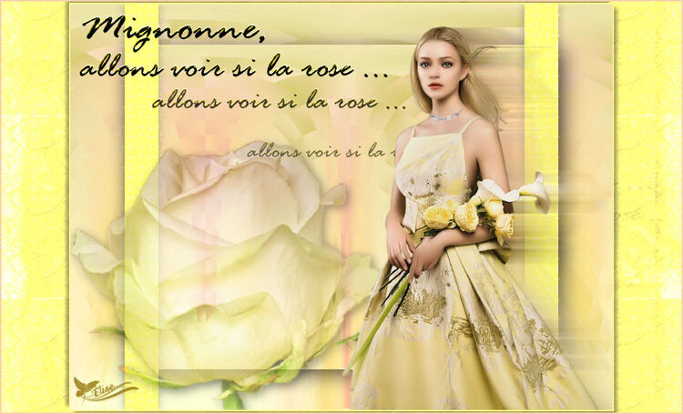 Mignonne     de Noisette