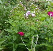 - Un petit tour au jardin plaisir -