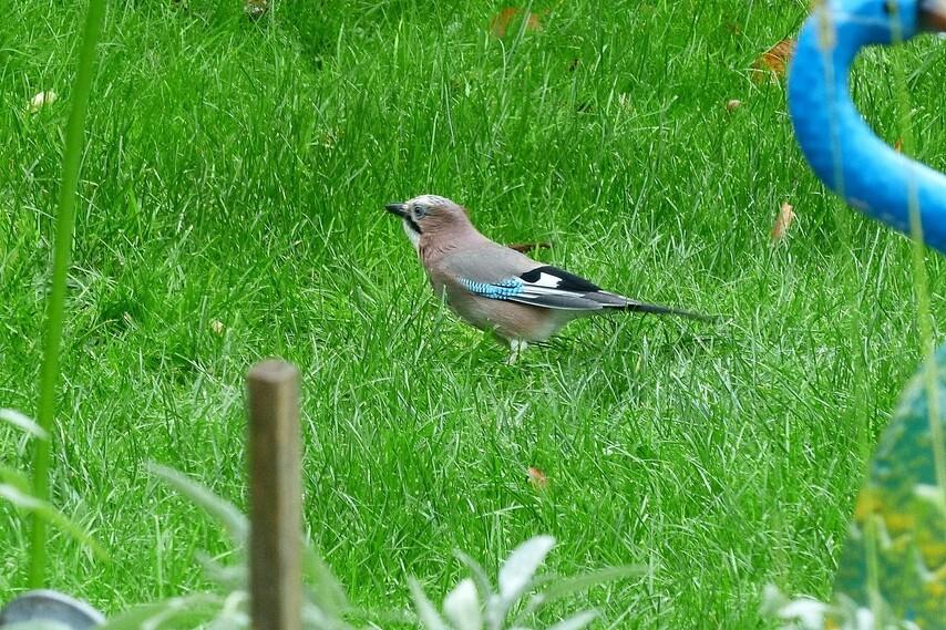 Les oiseaux au jardin