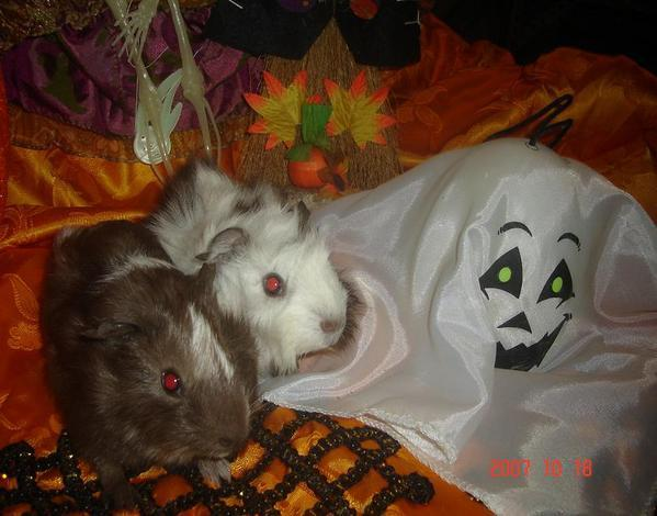 halloween--halloween--.JPG