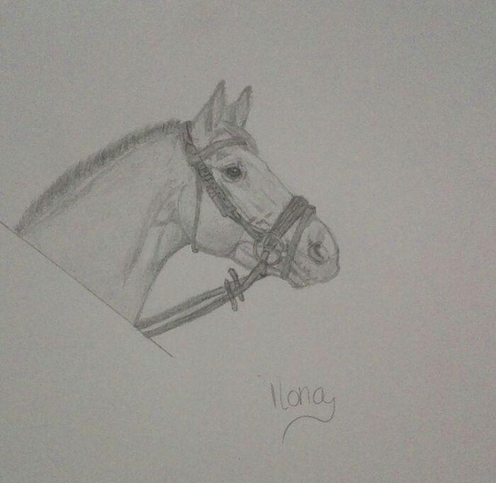 Photo de Dessin de chevaux.