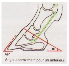 Angle pieds