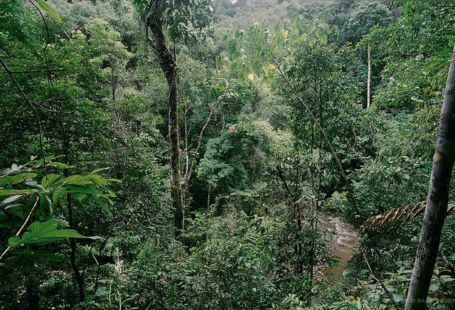 La déforestation mondiale ralentit car de plus en plus de forêts sont mieux gérées, selon la FAO