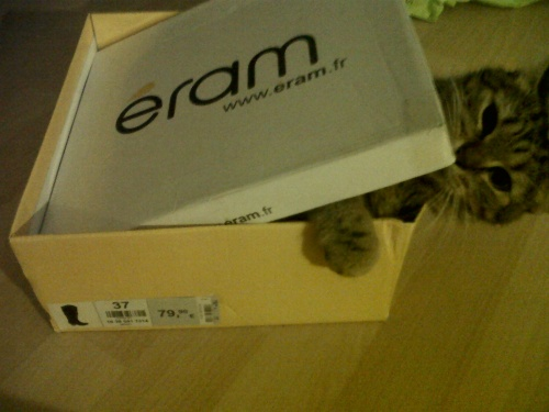 El gato loco !
