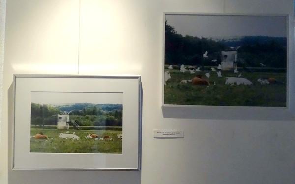 """""""Ah ! la vache !"""", une exposition pleine d'humour à l'Office du Tourisme de Recey sur Ource"""