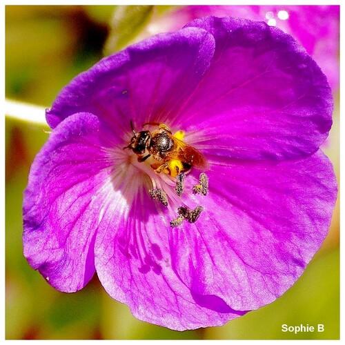 Précieux pollinisateurs .