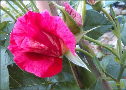 Portes ouvertes à la jardinerie 'Delbard'