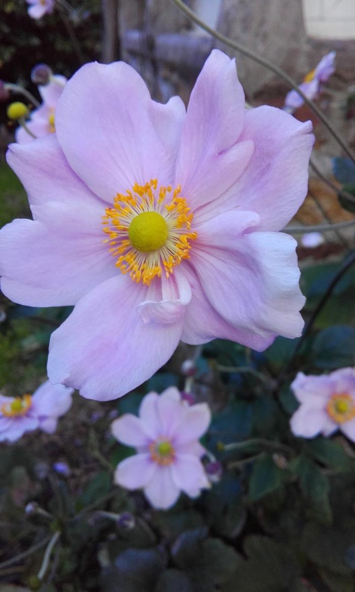 derniéres   fleurs
