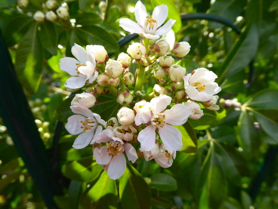 Fleurs d'avril 2019, encore des fleurs!