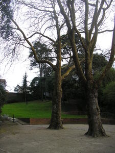 Parc_de_Gourmalon_mars_003