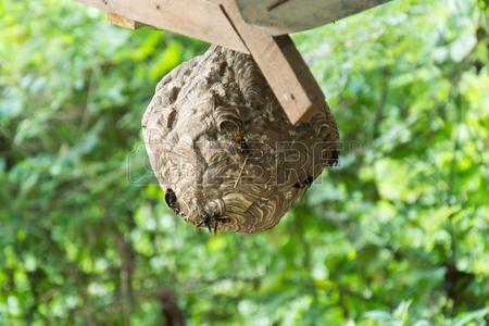 nid de guêpe Banque d'images - 61938604