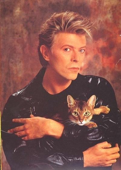David Bowie et les chats :