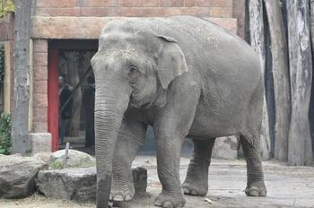 dierenpark amersfoort 2011 038