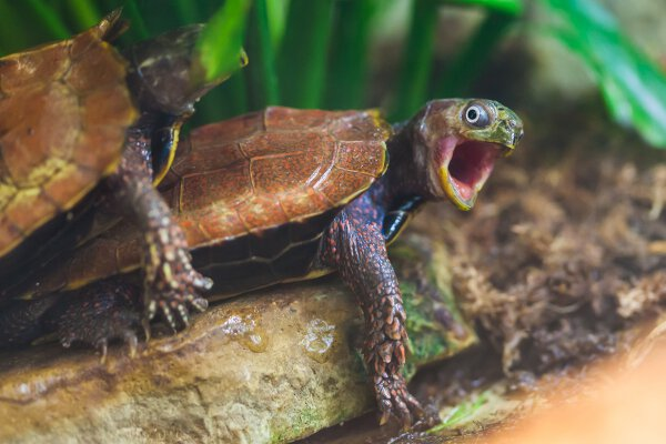 Une tortue surprise