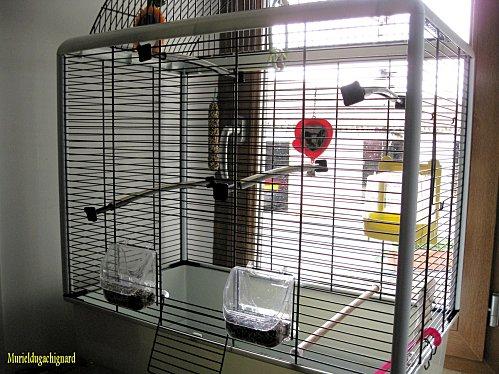 Nettoyage-cage-fifi-juin-2011 1342 (Copier)