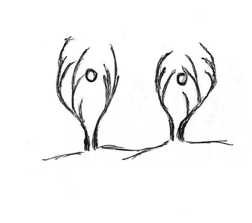 Plantes bizarroïdes III