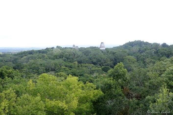 Vue du temple du serpent à deux têtes, Tikal