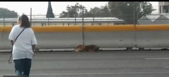 Elle traverse une autoroute aux risques de sa vie