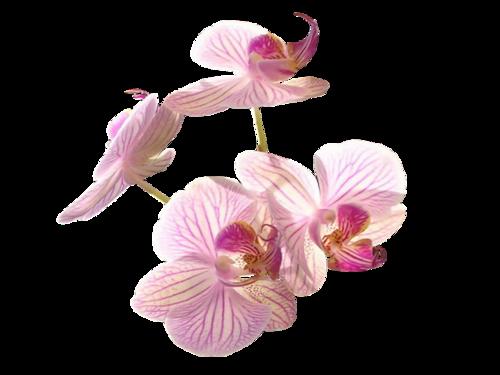 Orchidées / 2