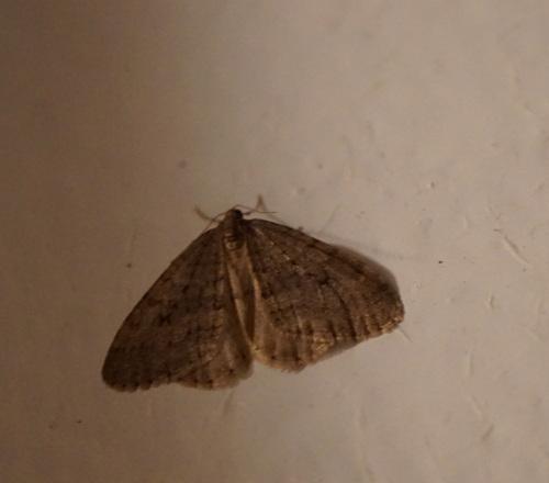 Un papillon en hiver