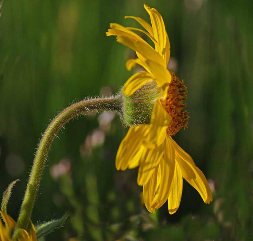 Fleurs-9 9131