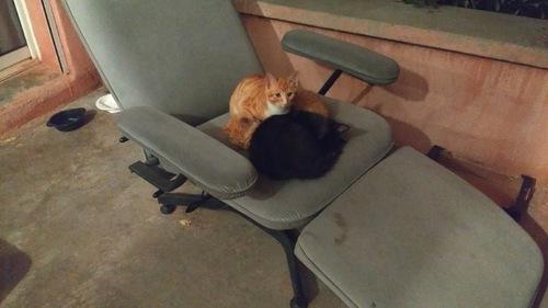 1 2 3 - 3 petits chats