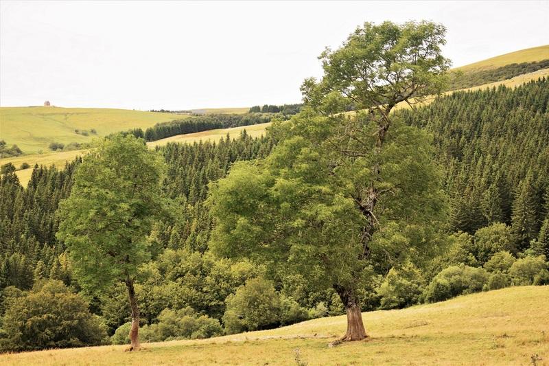 2016.08.19 Lac Pavin, Lac Gayme (Région Auvergne) 2
